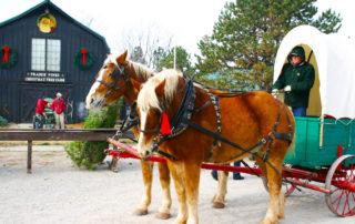 Carriage Ride at Prairie Pines Christmas Tree Farm
