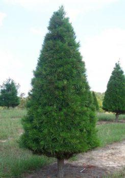 Christmas Tree Farm Arizona.Christmas Trees Wedding Venue Wichita Christmas Tree